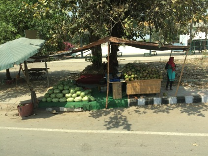 Watermelons and coconuts for sale
